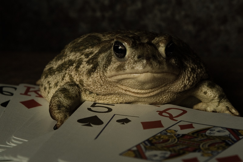 Keeper of the Cards