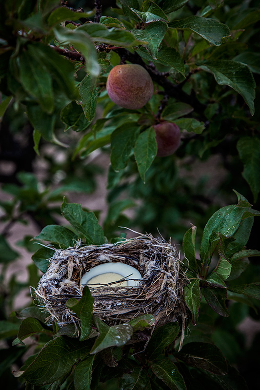 Nesting Place #25
